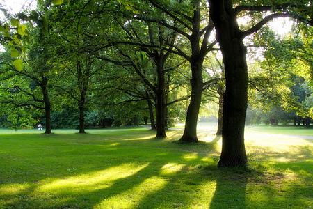 Tiergarten ou quoi visiter a berlin
